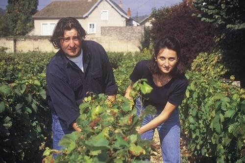 Marc Rougeot in de wijngaard
