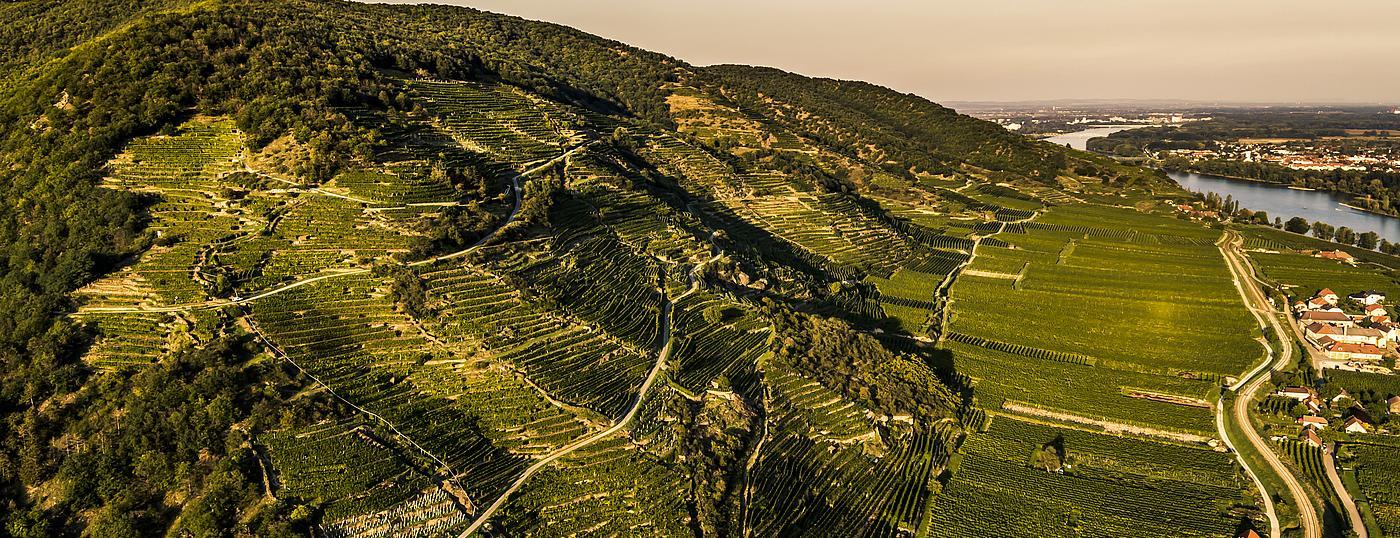 De Loibenberg wijngaard in Wachau