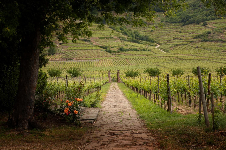 Clos des Capucins wijngaard