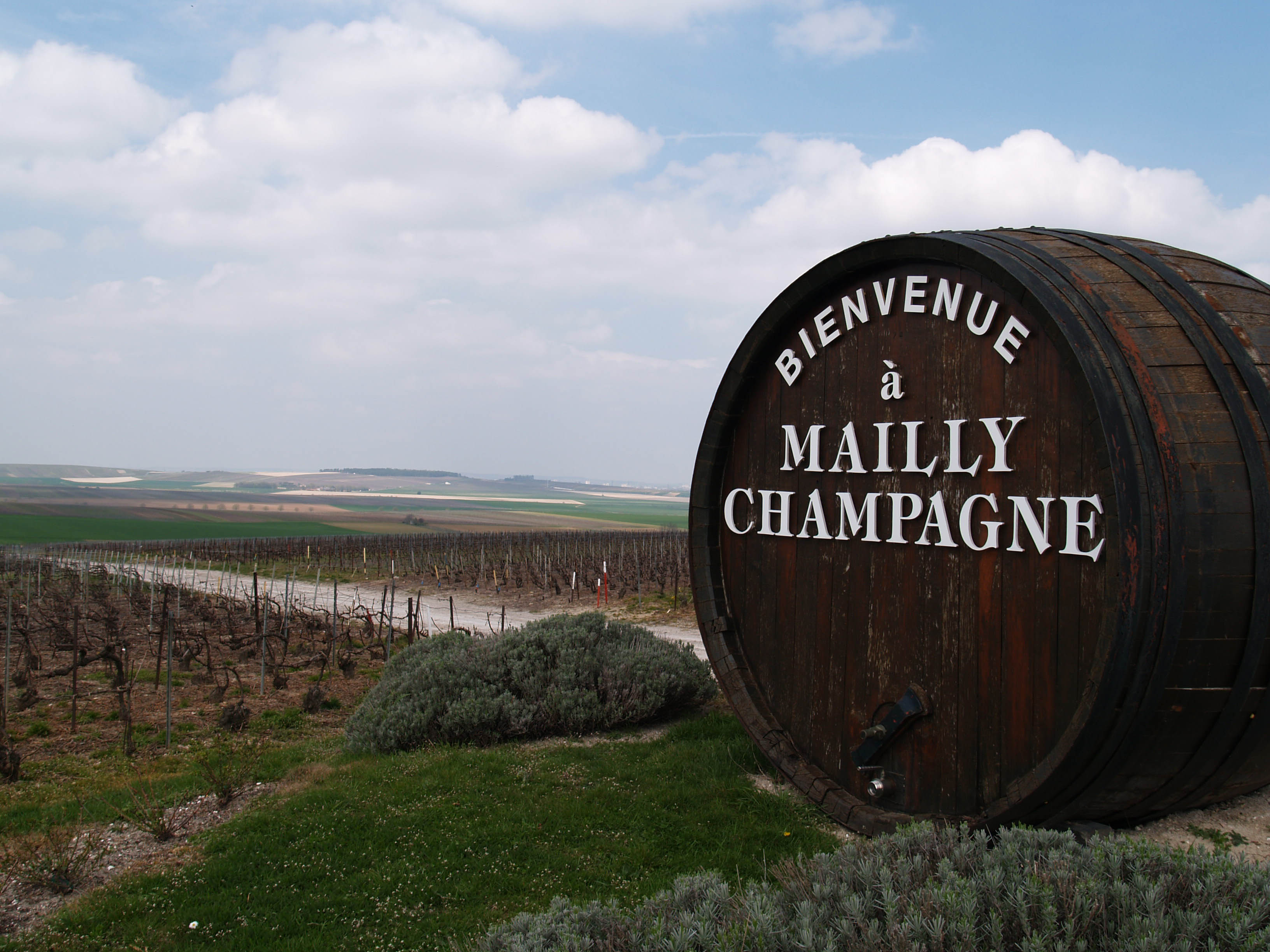 Mailly Grand Cru, Montagne de Reims