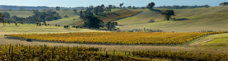 Grosset Alea Rockwood vineyard