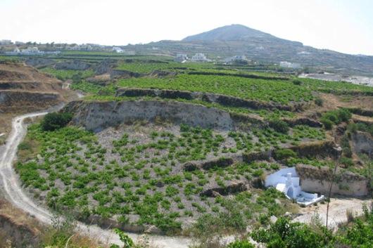 Domaine Sigalas, Santorini